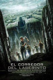 Ver El corredor del laberinto (The Maze Runner) online